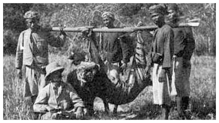 Harimau Bali mati ditembak pada 3 November 1911