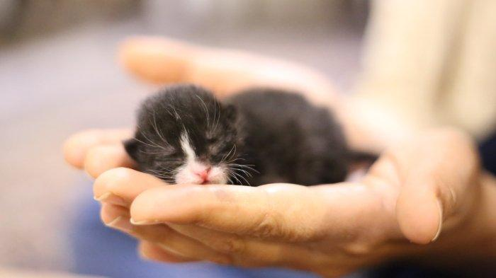 FOTO: Ilustrasi Anak Kucing