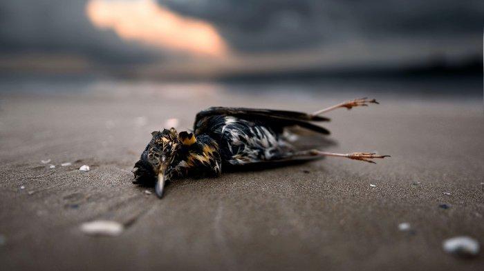 ilustrasi-seekor-burung-mati.jpg