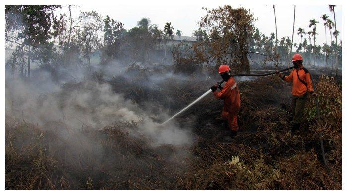 Petugas Manggala Agni Daops Pekanbaru berusaha memadamkan kebakaran lahan seluas dua hektare di Jalan Siak 2 Kelurahan Air Hitam, Kecamatan Payung Sekaki Pekanbaru, Senin (2/9/2019). Kebakaran lahan dikawasan itu telah terjadi sejak hari Kamis (29/8/2019) lalu. Berdasarkan pantauan satelit yang dirilis Badan Meteorologi Klimatologi dan Geofisika BMKG Stasiun Pekanbaru, terpantau 150 hotspot yang tersebar di beberapa Kabupaten dan Kota di Riau. Terbanyak terpantau di Kabupaten Rokan Hilir 49 titik, Pelalawan 30 titik, Bengkalis 25 titik, Meranti 16 titik, Indragiri Hulu 13 titik, Indragiri Hulu 13 titik, Kampar 2 titik, Kuansing dan Siak masing-masing 1 titik. TRIBUN PEKANBARU/THEO RIZKY