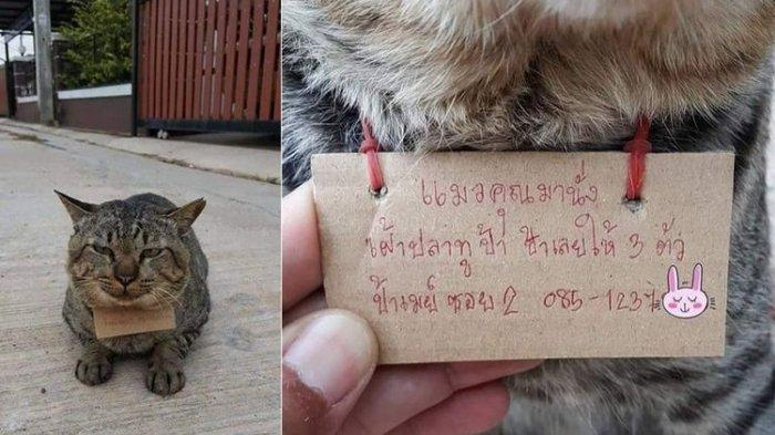 kucing-lucu-bawa-utang.jpg
