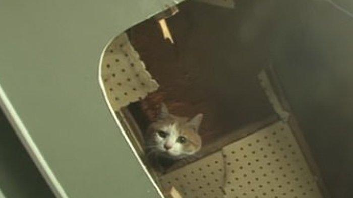 Momen Penyelamatan Seekor Kucing Yang Terperangkap Selama 2 Tahun Di Balik Tembok Swalayan Tribunnewswiki Com Mobile