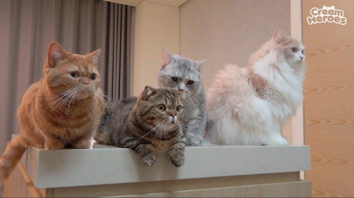 Kucing Tribunnewswiki Com Mobile