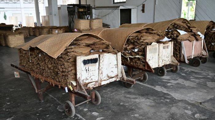 Tembakau dengan kualitas 1 biasanya, akan dikirim ke pabrik rokok di kawasan setempat sedangkan kualitas 2 dan 3 diexport ke Eropa.
