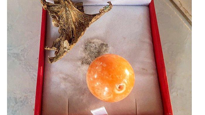 Mutiara melo oranye milik nelayan Thailand yang sudah ditawar Rp5 miliar.