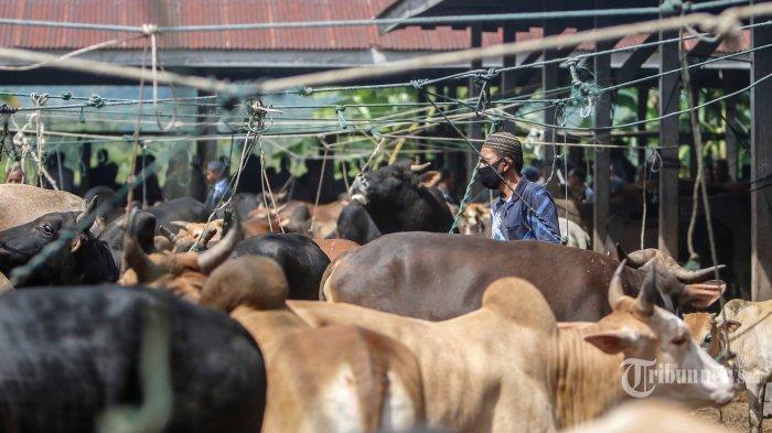 Ilustrasi peternakan sapi.