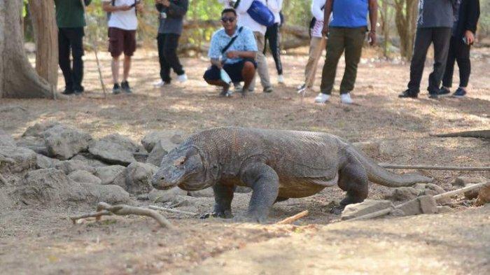 Kementerian Pariwisata dan Ekonomi Kreatif bersama dengan BOPLBF melaksanakan famtrip dengan media di kawasan Taman Nasional Komodo, Labuan Bajo, Manggarai Barat, NTT, Minggu, (13/9/2020).