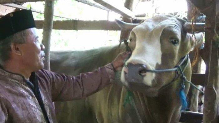 Rahman Takka bersama sapi miliknya yang dibeli Presiden Jokowi, saat ditemui di kandang sapi miliknya di Rea Barat, Desa Patampanua, Kecamatan Matakali, Polewali Mandar, Sulawesi Barat, Minggu (19/7/2020). Sapi berbobot 1,2 ton itu dipilih Jokowi sebagai sapi kurban untuk dipersembahkan kepada warga Sulawesi Barat pada hari raya Idul Adha mendatang.