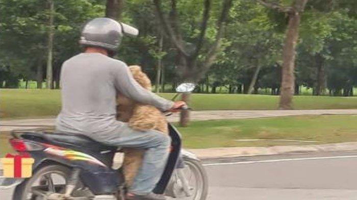 seorang-ayah-membawa-boneka-mengungkapkan-anaknya-ingin-boneka-beruang.jpg