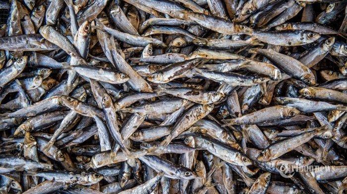 Sering dianggap remek karena harganya murah, ikan teri ternyata mampu kurang risiko serangan jantung.
