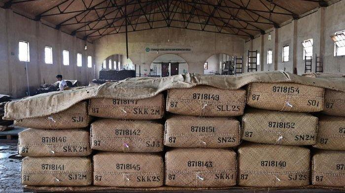 Daun tembakau yang siap export