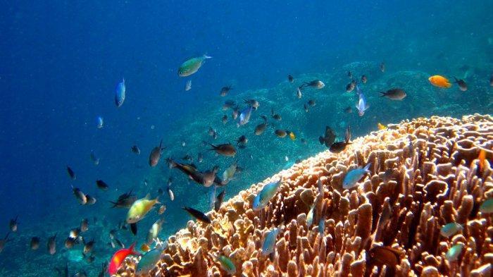 terumbu karang di Pulau Tagalaya