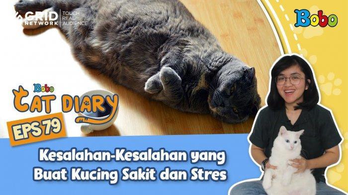 tvri-diary-kucing-kesalahan-kesalahan-pemilik-kucing-yang-buat-kucing-sakit-dan-stres.jpg
