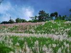 Kebun Tebu Gendu