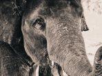 Viral Video di Twitter, Perpisahan Penuh Air Mata Penjaga Hutan Kepada Gajah yang Dirawatnya