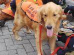 Basarnas Kerahkan Anjing Pelacak K9 untuk Mencari Korban Gempa di Mamuju Sulawesi Barat