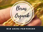 belajar-dari-rumah-tvri-beras-organik-bio-sains-pertanian.jpg