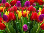 Selain Mawar, 7 Bunga ini Cocok Diberikan Saat Hari Valentine 14 Februari