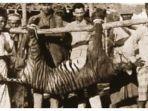 Hari Ini dalam Sejarah 27 September 1937: Harimau Bali Jadi Subspesies Harimau Pertama yang Punah