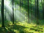hutan-2.jpg