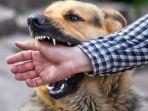 ilustrasi-gigitan-anjing-rabies.jpg