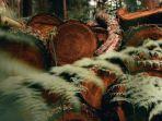 ilustrasi-penebangan-hutan-atau-deforestasi-2.jpg