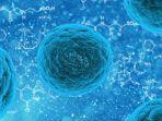 Virus Corona Belum Usai, Ahli Sudah Ingatkan Soal Candida Auris, Jamur Mematikan yang Kebal Obat