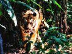 ilustrasi-seekor-harimau-berada-di-kebun-1.jpg