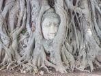 Fakta Asal-usul Kepala Buddha yang Muncul dari Akar Pohon di Thailand