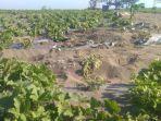 Kebun Melon di Kebumen Rusak untuk Latihan Tembak TNI AD, Warga Mengaku Ikhlas: Itu Tanah Negara