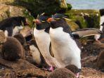 Kelakuan ''Penguin Bingung' yang Menggemaskan Ini Jadi Viral di Medsos, Apa yang Sebenarnya terjadi?