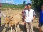 Kelanjutan Polisi Tembak Sapi Warga, Ini Kata Keluarga Samsuddin yang Diberi Ganti Sapi Ukuran Kecil