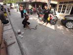 ular-kobra1.jpg