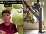 Video Pohon Nangka Tumbuh di dalam Rumah Viral di Tiktok, Begini Kata Sang Pemilik