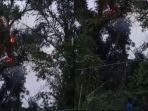 Viral Video Pohon Tua di Pemalang Tiba-tiba Muncul Api Besar Menjelang Magrib, Begini Faktanya
