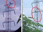 Viral Remaja Nekat Panjat Tower Sutet, Sempat Injak Sang Kakak yang Coba Membujuk Turun