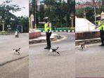Viral di TikTok, Polisi Bantu Seekor Kucing Menyeberang Jalan, Warganet Ramai Beri Pujian