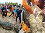 Wanita di Kalimantan Utara Dimakan Buaya Air Asin, Warga Bedah Perut Buaya dan Temukan Tubuh Fatimah