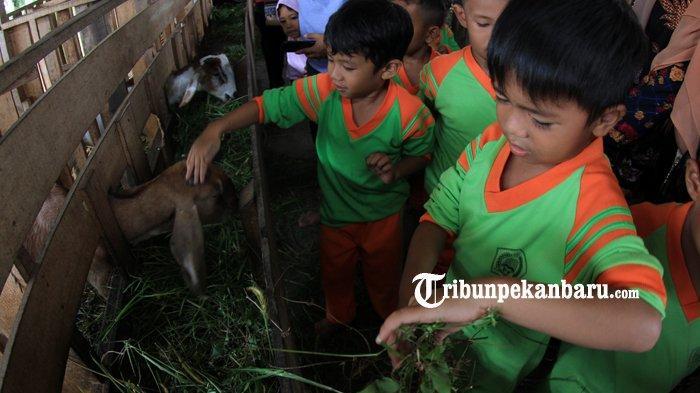 Belajar Sambil Bermain di Taman Agrowisata Tenayan Raya Pekanbaru