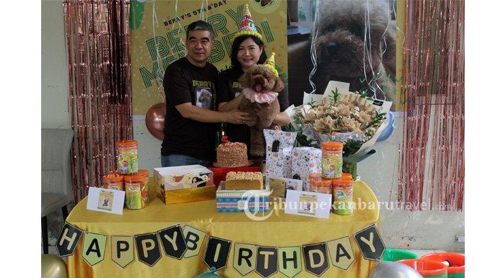 Berbagi Kebahagiaan, HUT ke-5 Anjing Pudel Bernama Berry Dirayakan di Shelter Dog Lovers Pekanbaru
