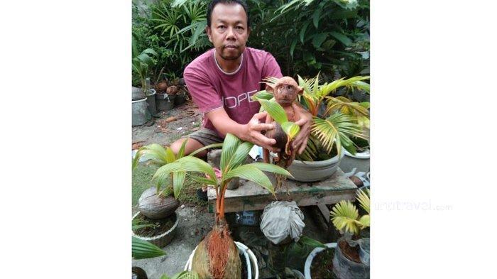 Pria ini Jual Bonsai Kelapa Sampai Jutaan Rupiah, Ada yang Bentuk Ayam, Elang, Siput Hingga Monyet