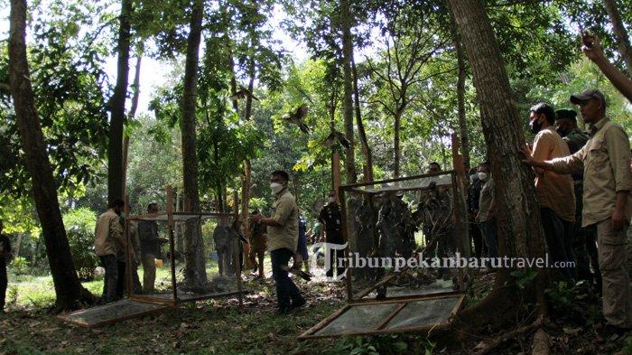 Balai Besar Konservasi Sumber Daya Alam Riau bekerja sama dengan Fauna & Flora International Indonesian Programme menggelar Deklarasi Penyelamatan Taman Wisata Alam (TWA) Sungai Dumai, Selasa (16/3/2021). Kegiatan itu juga diisi dengan pelepasan ratusan burung