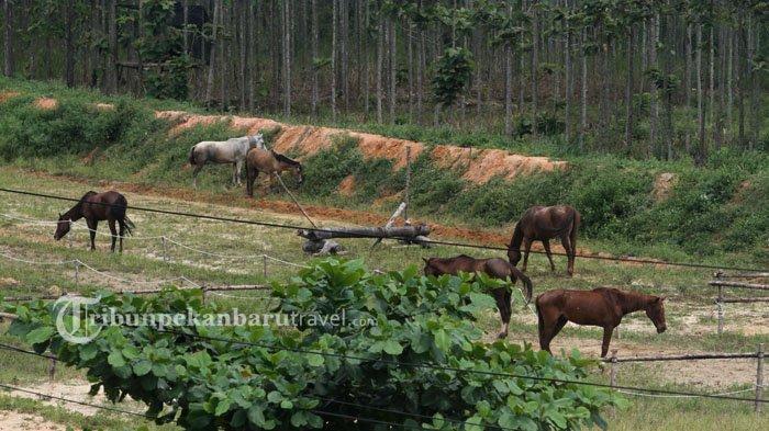 Horse Power Tambusai Tawarkan Sensasi Berkuda di Tengah Kota