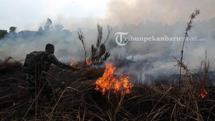 Seribu Hektare Lebih Lahan di Riau Sudah Terbakar Sejak Awal 2020, Waspada Musim Kemarau
