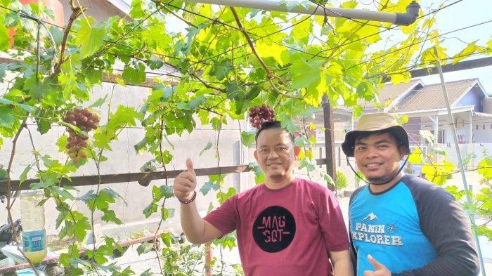 Komunitas PengANGGURan Riau Berharap Seluruh Kalangan Dapat Menikmati Buah Anggur