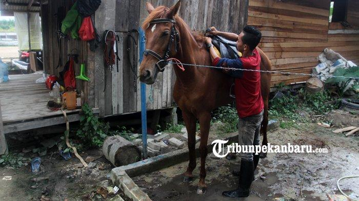 FOTO : Wisata Berkuda di Savana Stable Pekanbaru - kuda6.jpg