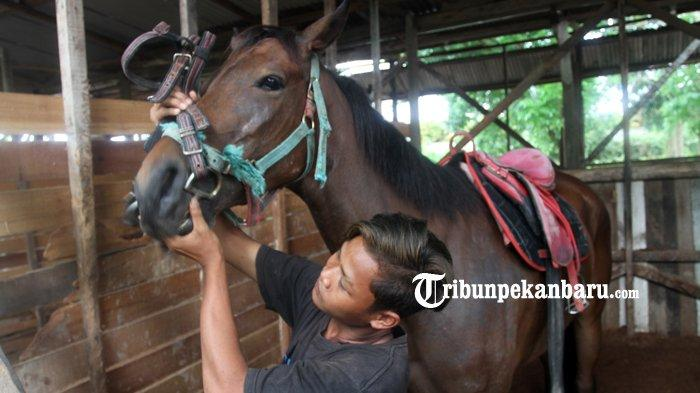 FOTO : Wisata Berkuda di Savana Stable Pekanbaru - kuda8.jpg