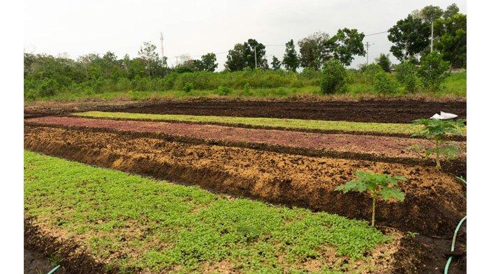 Gandeng UKM dan Petani, Organic Center Pekanbaru Kedepankan Kualitas