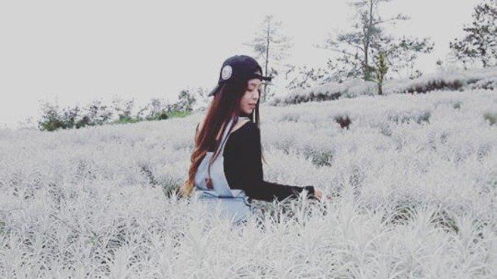 6 Kebun Bunga Instagramable di Bali, Padang Bunga Kasna Bagai Dihujani Salju