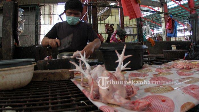 Harga Daging Ayam Mulai Merangkak Naik Selama Masa PSBB di Pekanbaru, Telur Ayam Justru Turun